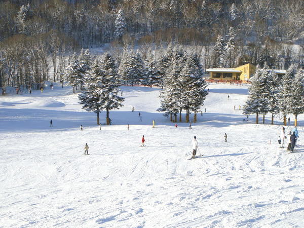 ダイナスティ スキー